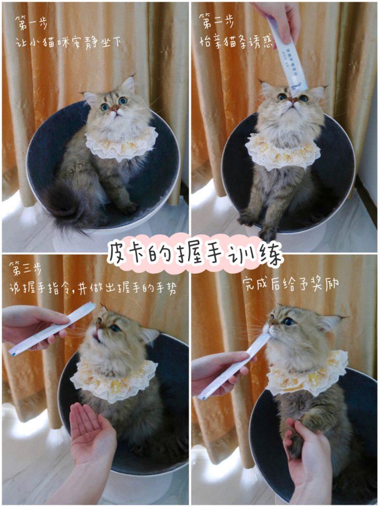 猫咪的训练小技巧 | 7天教会猫咪握手击掌插图