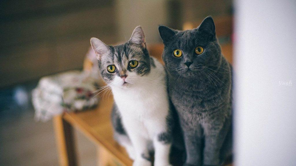 如何训练猫咪| 学握手、学坐下、不咬人、不乱吃插图