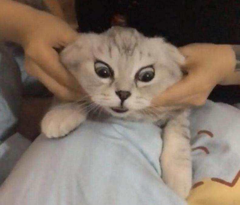 猫咪按摩手法技巧!让猫咪爱上你插图