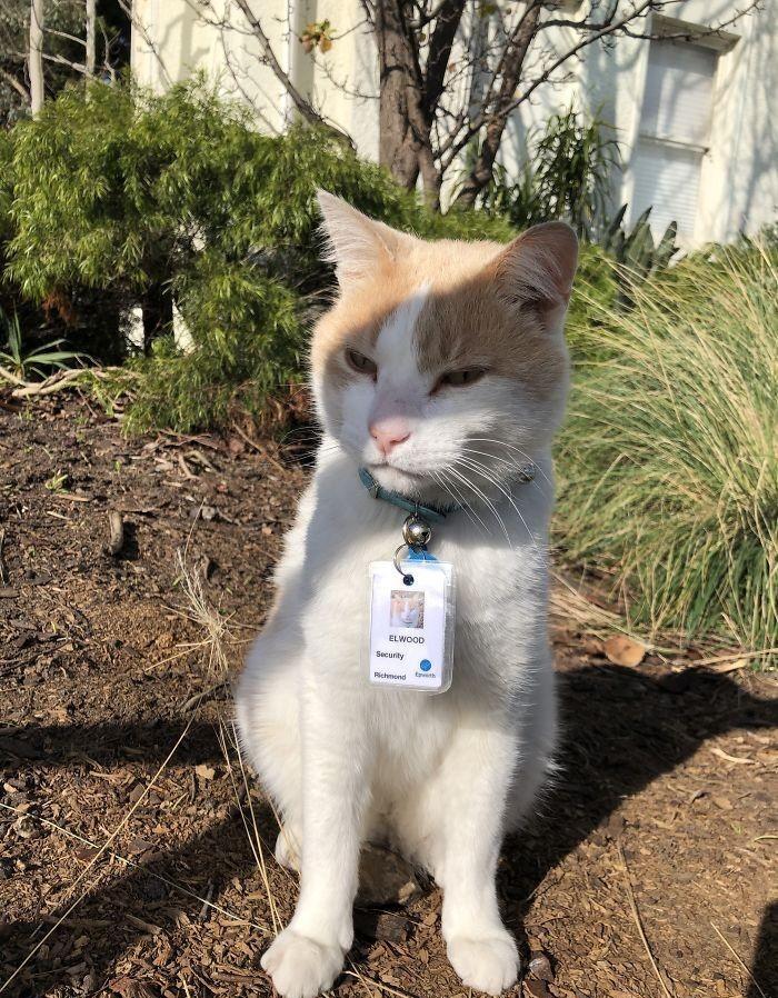 """猫咪为了""""应聘""""医院安保员,坚持全年无休来到在医院门口蹲守插图"""