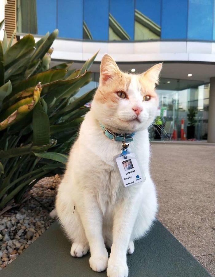 """猫咪为了""""应聘""""医院安保员,坚持全年无休来到在医院门口蹲守插图(3)"""
