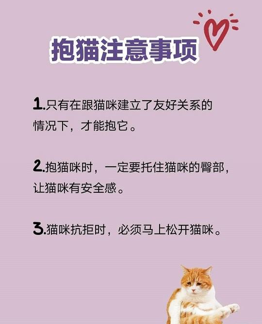 跟易烊千玺学抱猫,抱猫的正确姿势是怎样?插图(4)