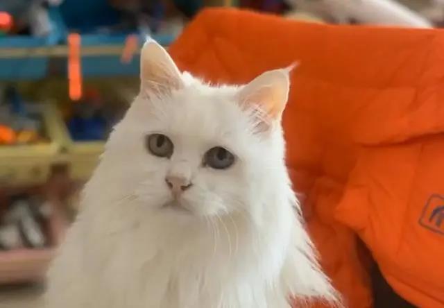 一只14岁猫咪的一生,看完泪流满面,但满满的都是爱啊!插图