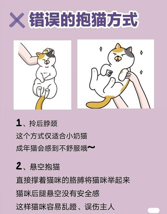 跟易烊千玺学抱猫,抱猫的正确姿势是怎样?插图(3)
