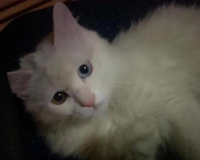 一只14岁猫咪的一生,看完泪流满面,但满满的都是爱啊!插图(1)