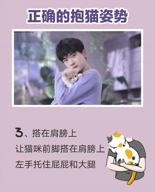 跟易烊千玺学抱猫,抱猫的正确姿势是怎样?插图(2)