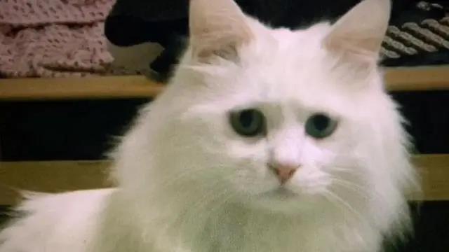 一只14岁猫咪的一生,看完泪流满面,但满满的都是爱啊!插图(3)