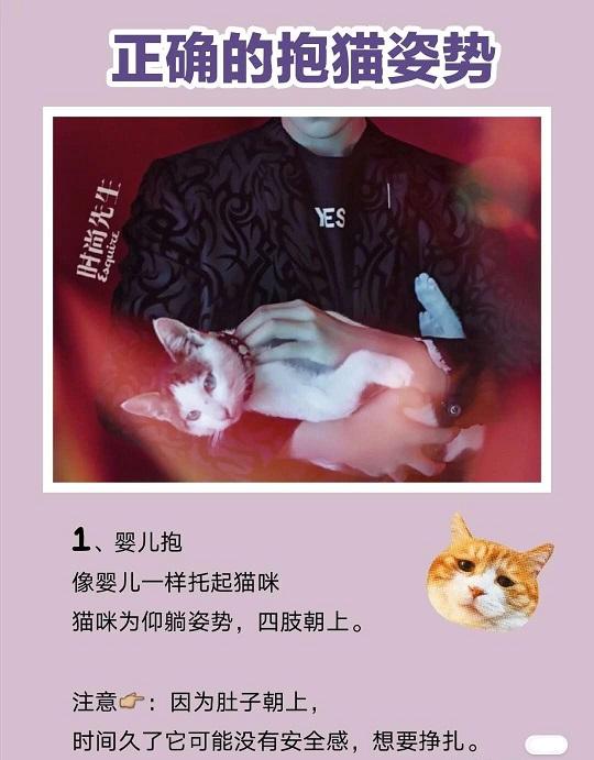 跟易烊千玺学抱猫,抱猫的正确姿势是怎样?插图