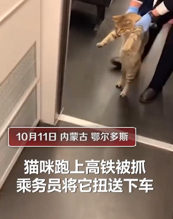 猫咪突破安检上车,被抓后小碎步过于搞笑:我不能回乡探亲?插图