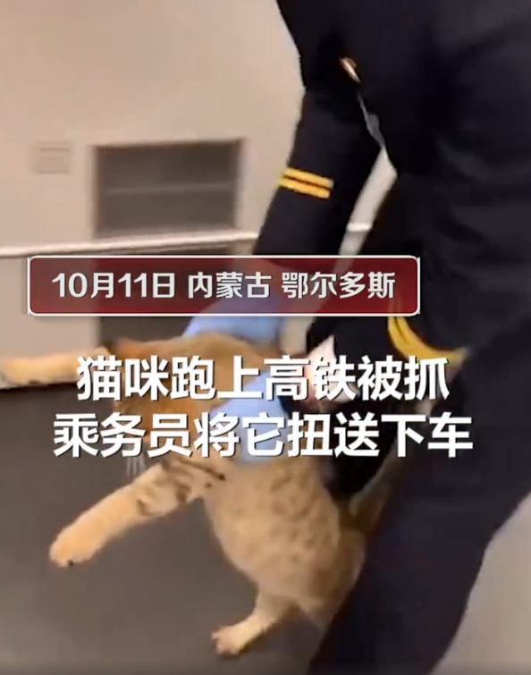 猫咪突破安检上车,被抓后小碎步过于搞笑:我不能回乡探亲?插图(2)