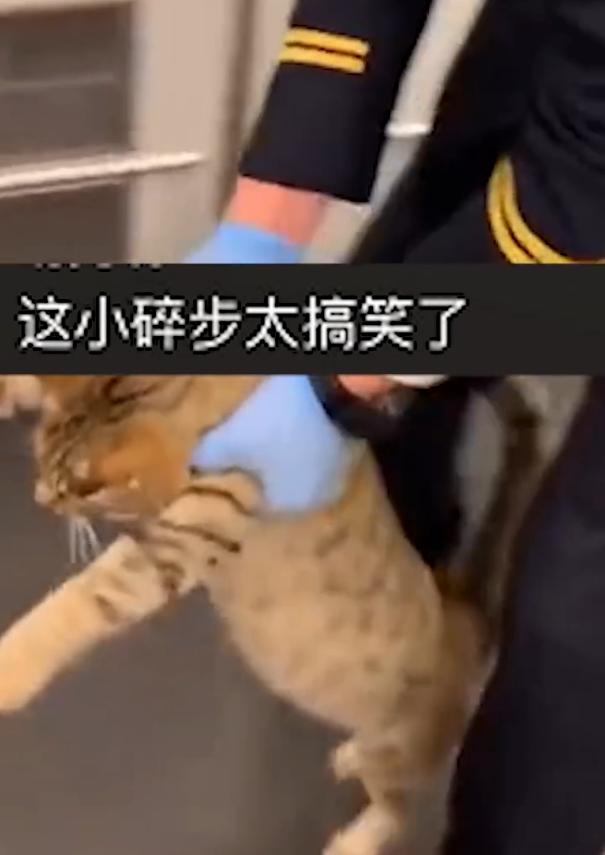 猫咪突破安检上车,被抓后小碎步过于搞笑:我不能回乡探亲?插图(3)