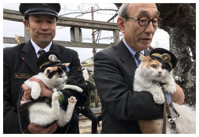 猫咪突破安检上车,被抓后小碎步过于搞笑:我不能回乡探亲?插图(7)