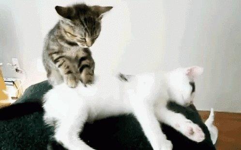 """猫咪踩奶的背后是一个""""悲伤""""的故事插图(1)"""