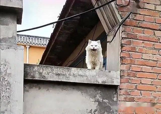 主人搬家,20岁猫咪被遗忘老宅,不带走它,到底是对是错?插图