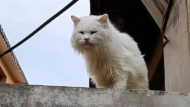 主人搬家,20岁猫咪被遗忘老宅,不带走它,到底是对是错?插图(5)