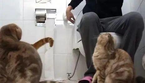 猫咪为什么喜欢跟着主人上厕所,为什么喜欢盯着看主人大小便插图(2)