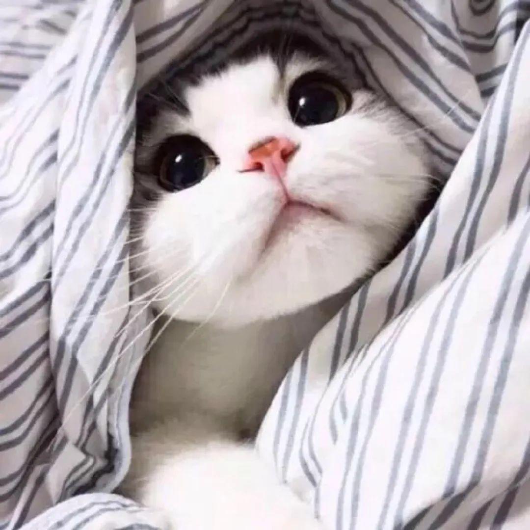 猫想出去玩怎么办,猫咪总是往外面跑是什么原因呢,不想回家为什么,怎么教育防止插图(4)