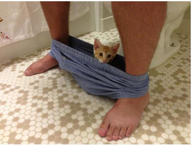 猫咪为什么喜欢跟着主人上厕所,为什么喜欢盯着看主人大小便插图(6)
