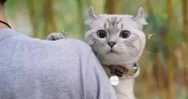 猫想出去玩怎么办,猫咪总是往外面跑是什么原因呢,不想回家为什么,怎么教育防止插图(3)