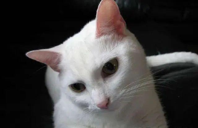 猫咪为什么喜欢跟着主人上厕所,为什么喜欢盯着看主人大小便插图(7)