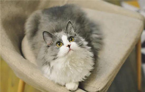猫咪为什么喜欢跟着主人上厕所,为什么喜欢盯着看主人大小便插图(1)