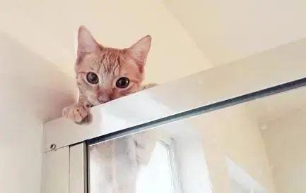 猫咪为什么喜欢跟着主人上厕所,为什么喜欢盯着看主人大小便插图(3)