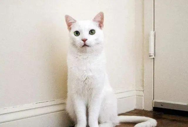 猫咪为什么喜欢跟着主人上厕所,为什么喜欢盯着看主人大小便插图(8)