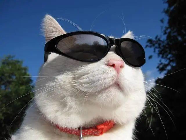 猫想出去玩怎么办,猫咪总是往外面跑是什么原因呢,不想回家为什么,怎么教育防止插图(5)