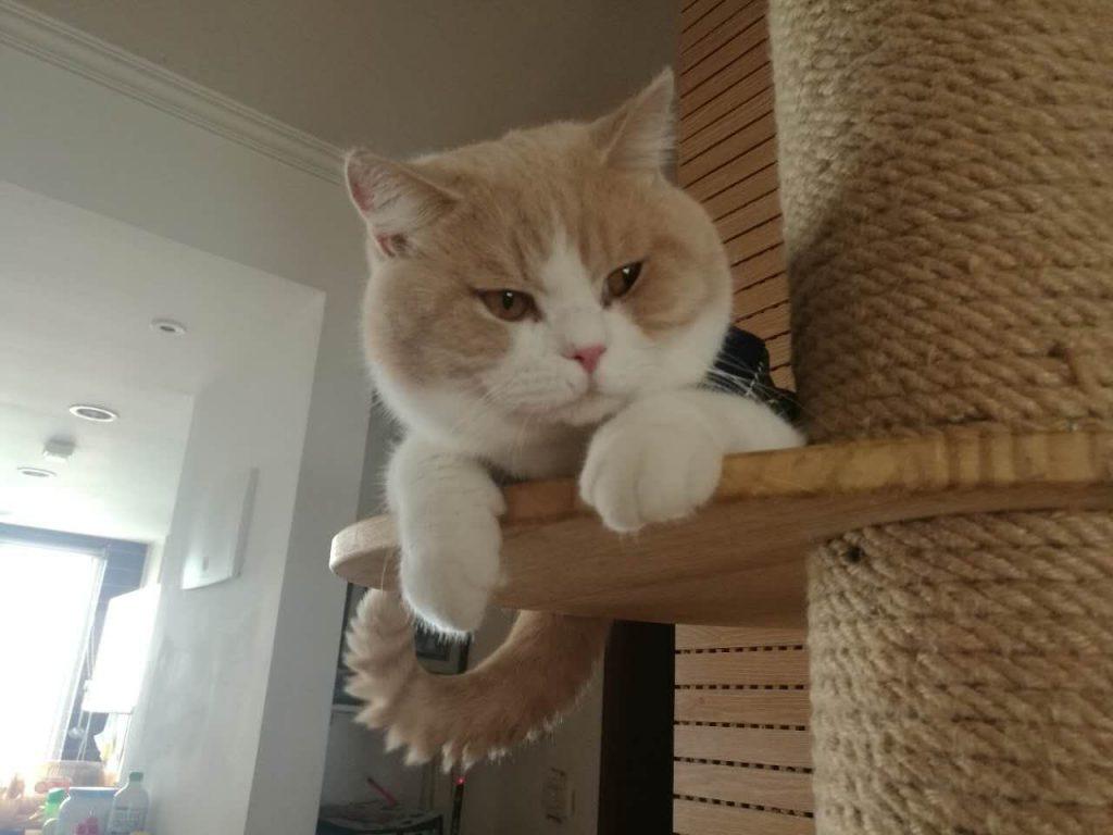 怎么让猫咪发腮,猫咪发腮攻略指南插图(1)