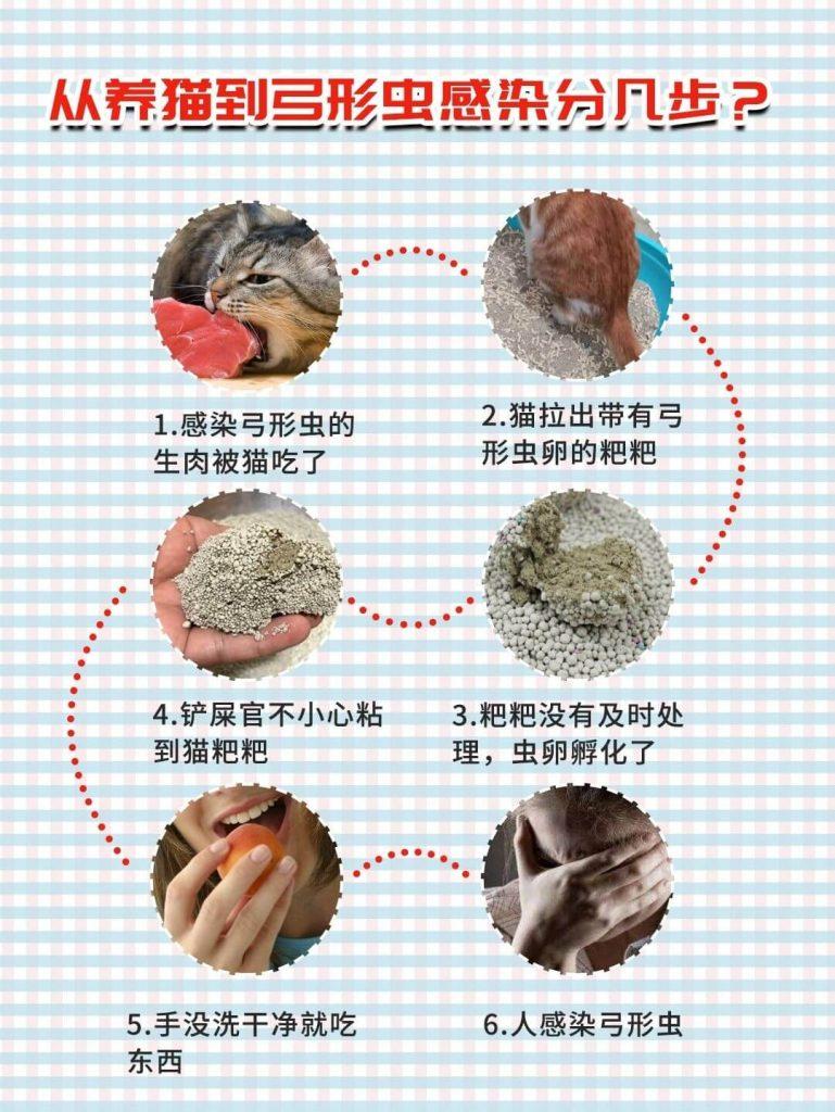 弓形虫揭秘|孕期科学养猫,不抛弃不放弃!插图(2)