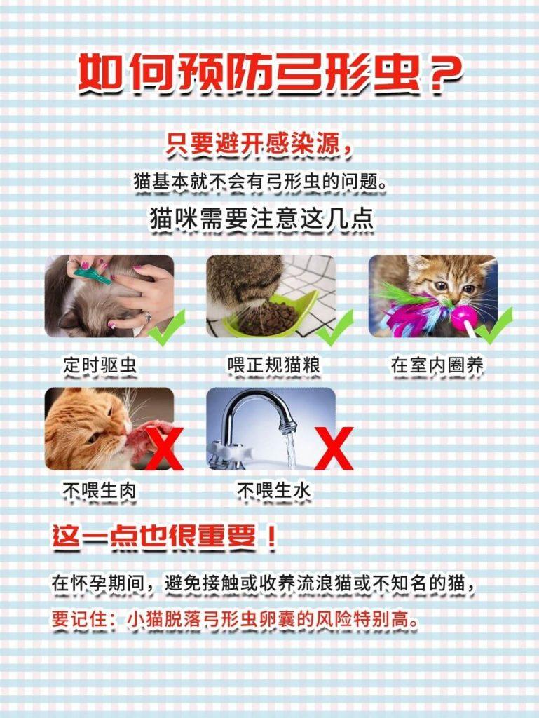 弓形虫揭秘|孕期科学养猫,不抛弃不放弃!插图(4)