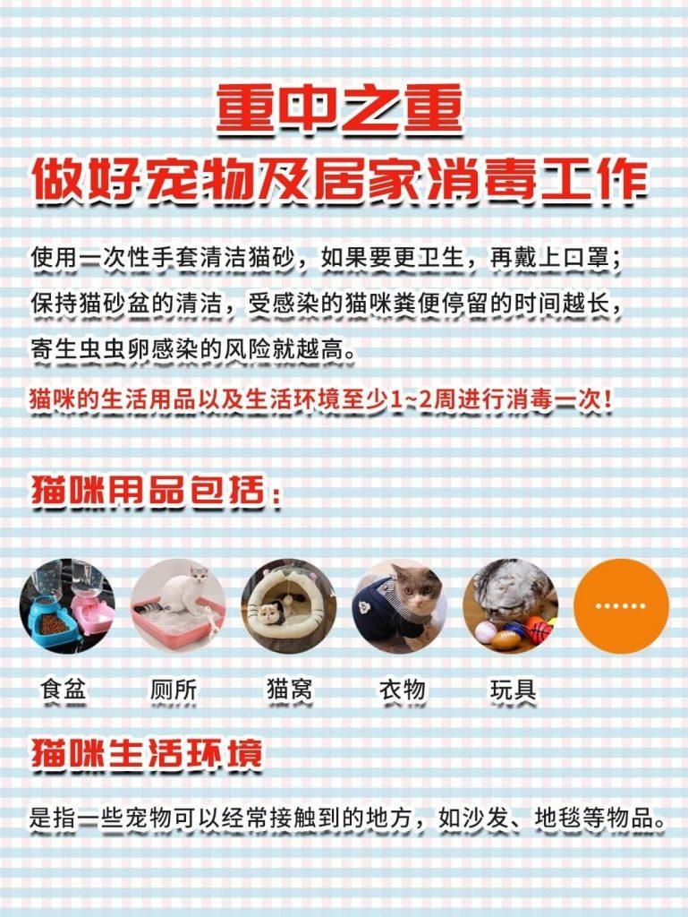 弓形虫揭秘|孕期科学养猫,不抛弃不放弃!插图(5)