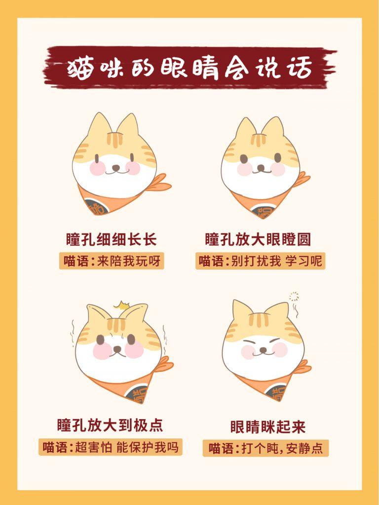教你掌握26种超全猫咪语言!新手养猫必看插图(7)