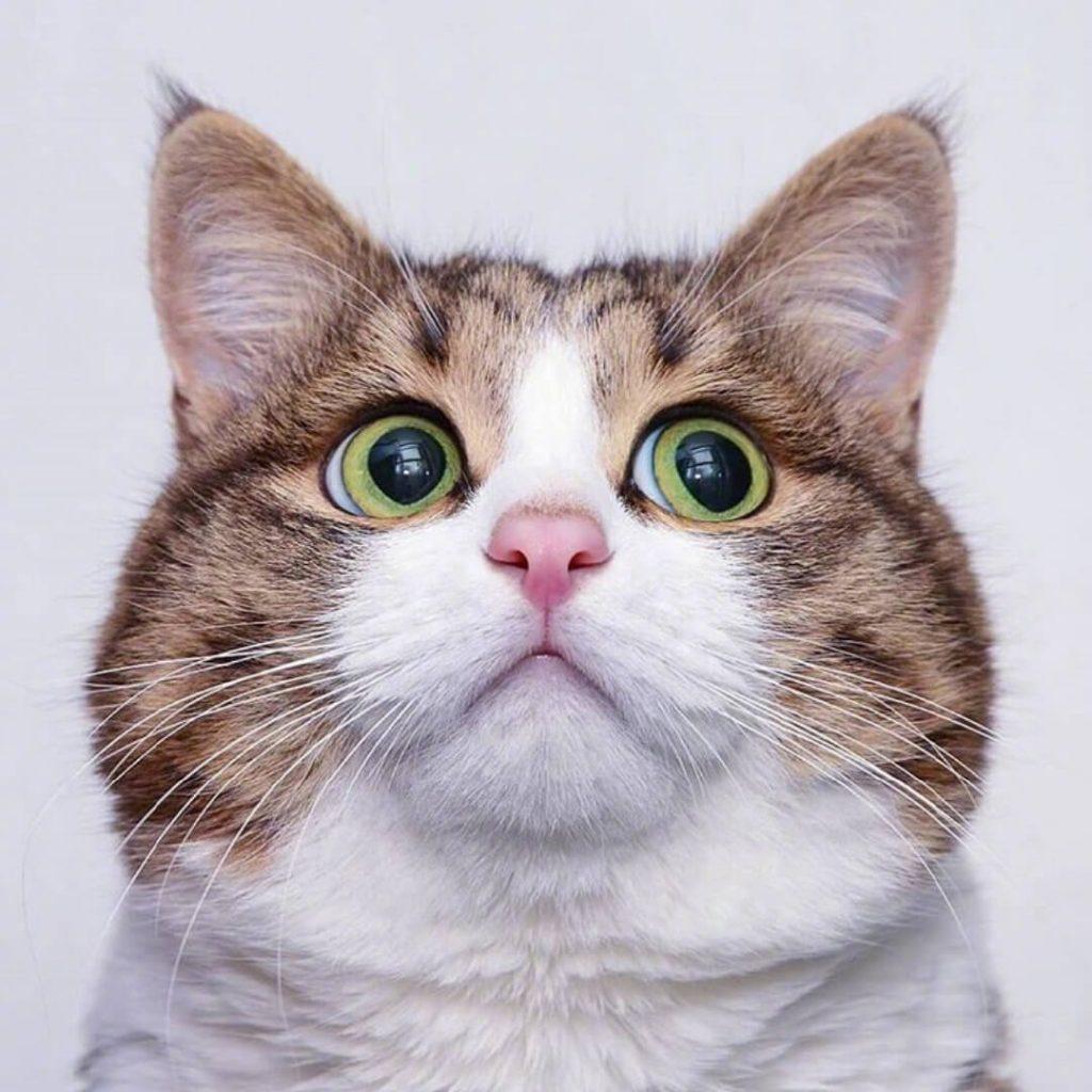 高清猫咪表情包大赏!插图(4)