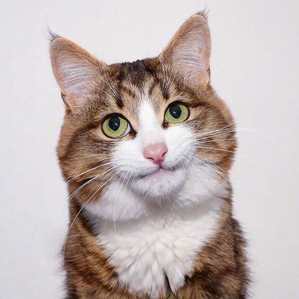 高清猫咪表情包大赏!插图(3)