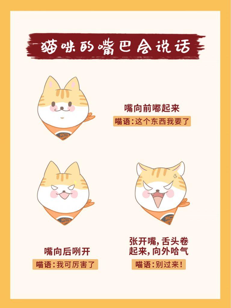 教你掌握26种超全猫咪语言!新手养猫必看插图(6)