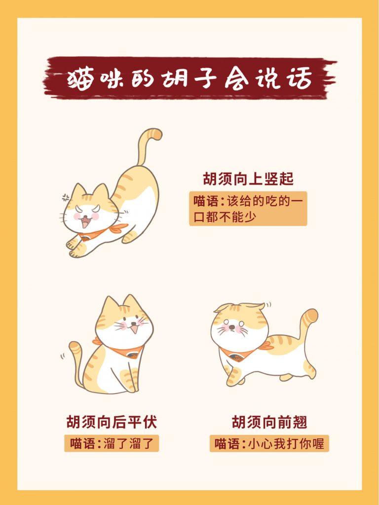 教你掌握26种超全猫咪语言!新手养猫必看插图(5)