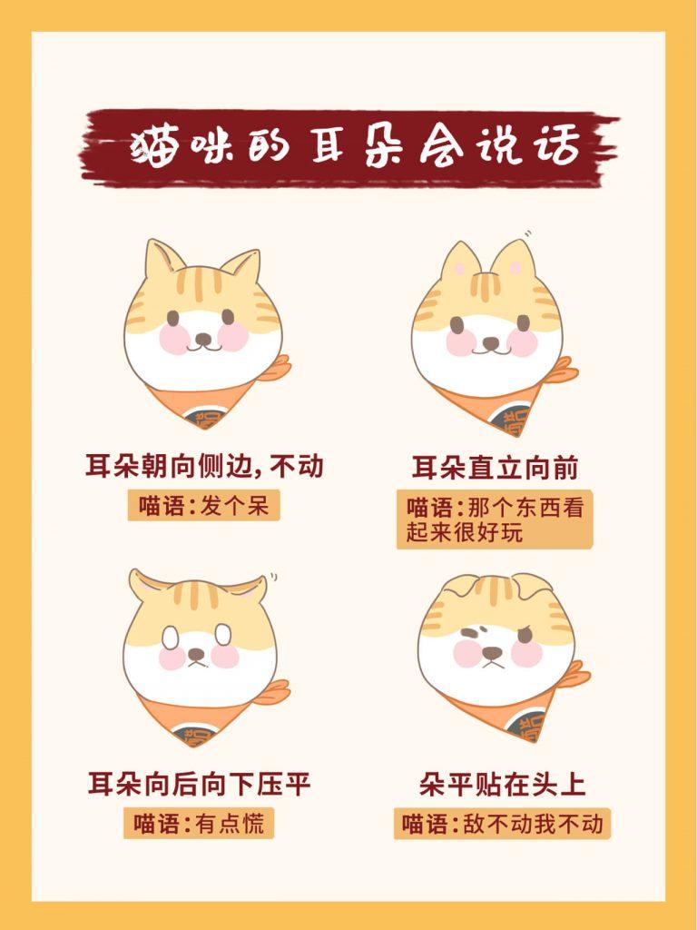 教你掌握26种超全猫咪语言!新手养猫必看插图(4)