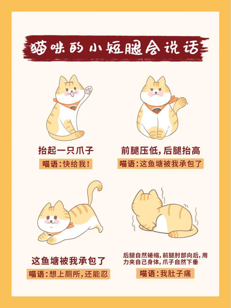 教你掌握26种超全猫咪语言!新手养猫必看插图(2)