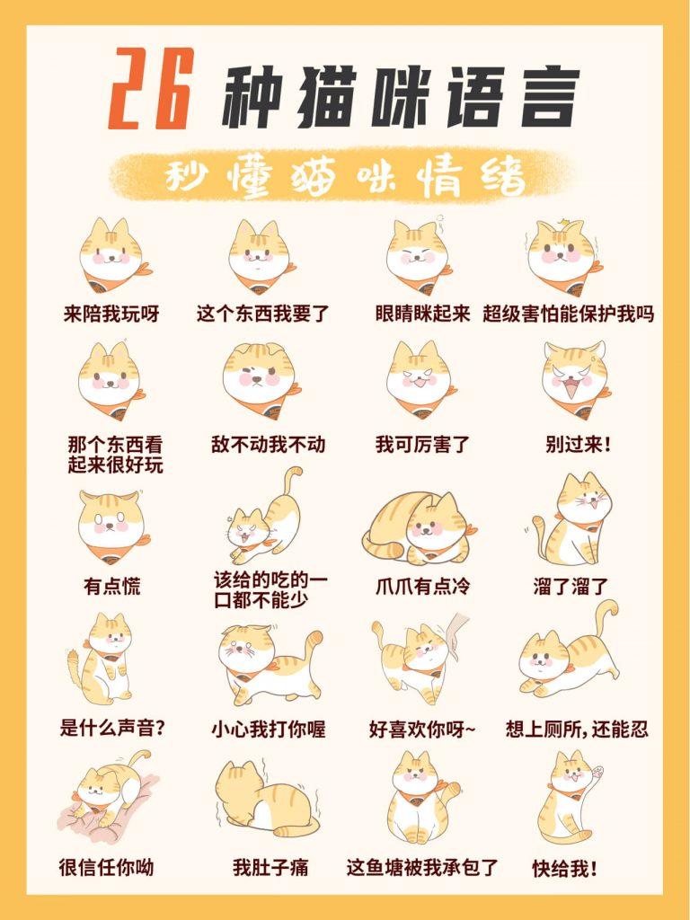 教你掌握26种超全猫咪语言!新手养猫必看插图