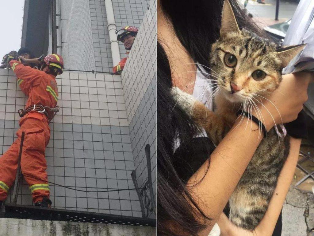 硬核救猫!老人用绳吊7岁孙子下楼救猫,五层楼无护栏插图(4)