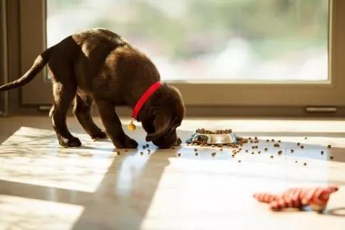 宠物泪痕怎么办?原因和解决办法都在这里了插图(2)
