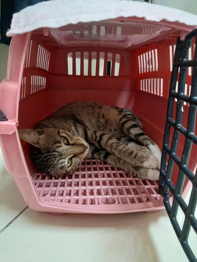 多年后在路上碰到的一只流浪猫让宠物主人断定是已经离世的泰迪犬插图(2)