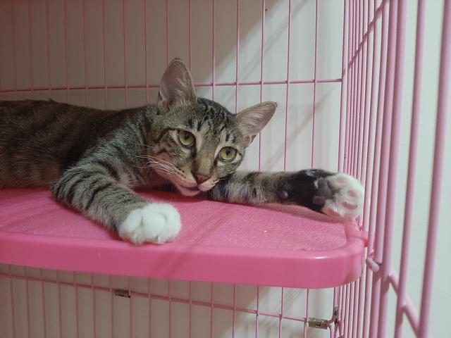 多年后在路上碰到的一只流浪猫让宠物主人断定是已经离世的泰迪犬插图(3)