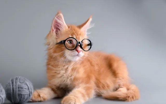 猫咪的小秘密?20个关于猫咪的冷知识!看看你都知道几个?插图(1)