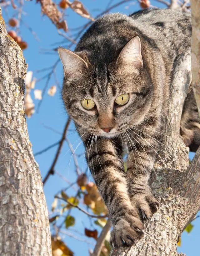 猫咪的小秘密?20个关于猫咪的冷知识!看看你都知道几个?插图(4)