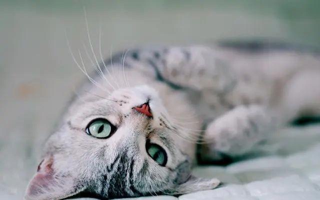 猫咪的小秘密?20个关于猫咪的冷知识!看看你都知道几个?插图(5)