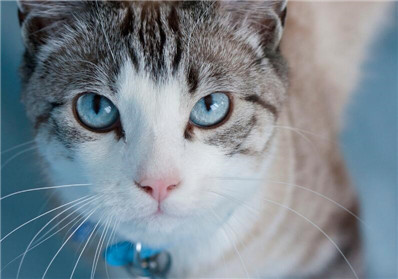 养猫必看|猫咪去泪痕攻略一篇搞定插图
