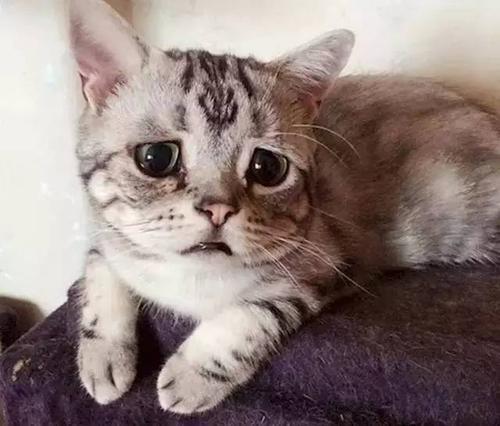 爱猫,就请拒绝猫咪去爪术插图(2)