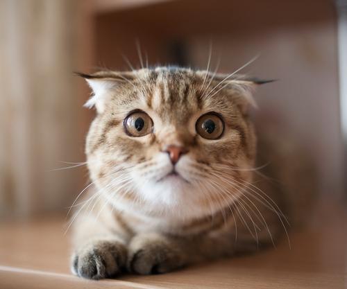养猫常有的6个误区|铲屎官必看!插图